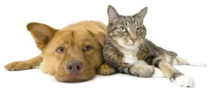 Protecting Your Pets: Electrical Safety Tips You Can't Ignore